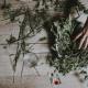 plante séchée